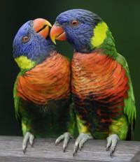Ázsia legnagyobb madárparkja